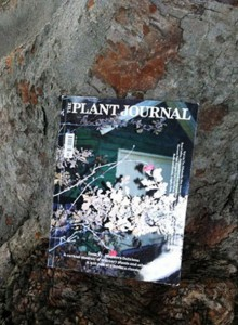 The Plant Journal | itfashion.com
