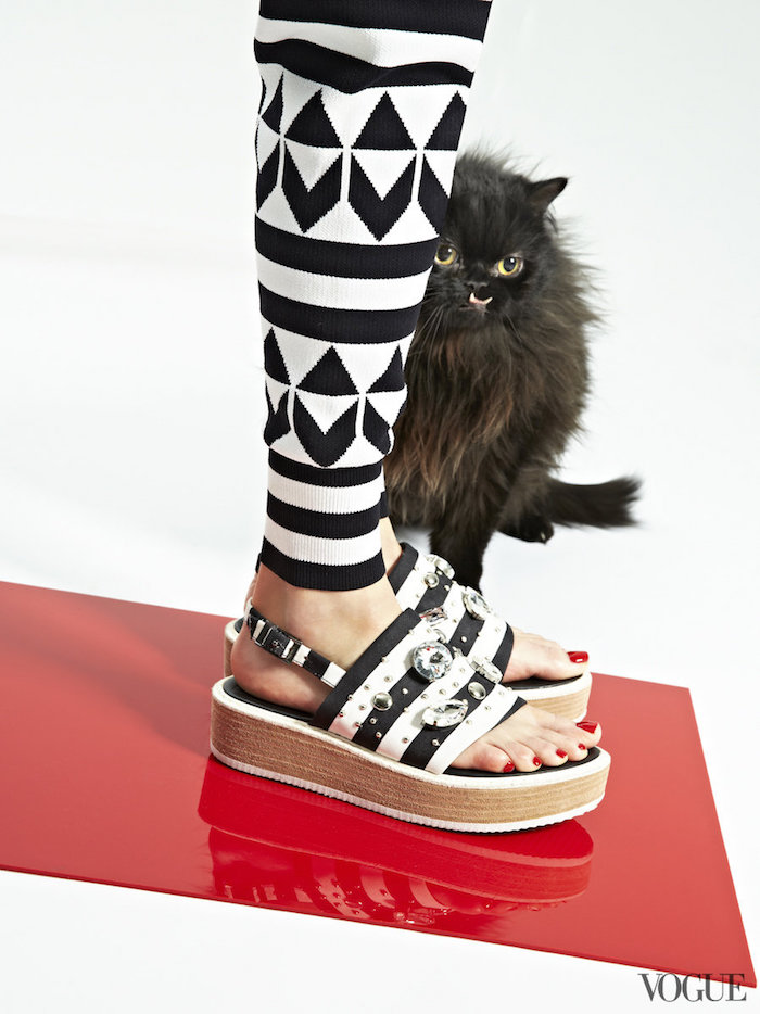 Entre gatos y sandalias | itfashion.com
