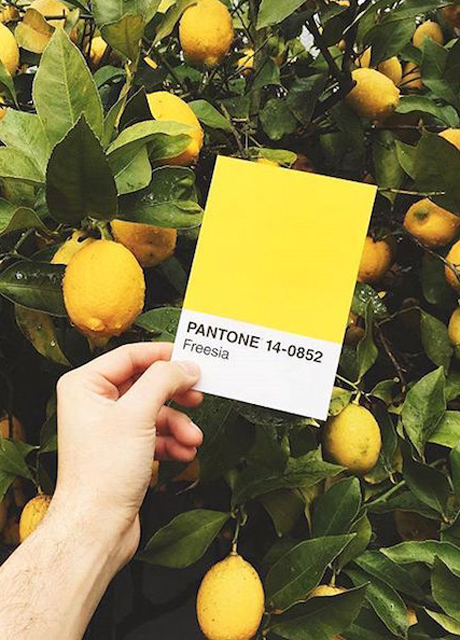 cover-test-pantone