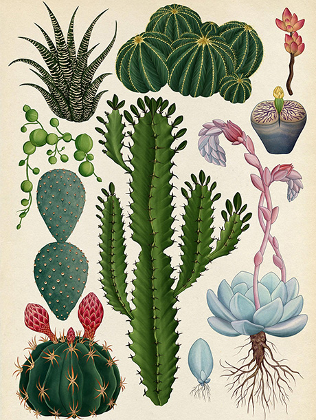 cover_botanical_draws