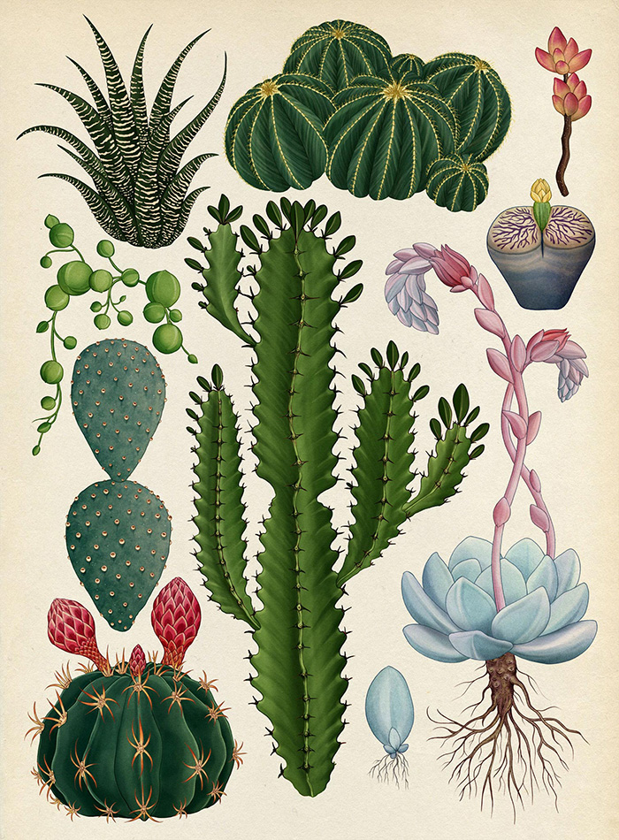 the-botanical-drawings-of-katie-scott-4