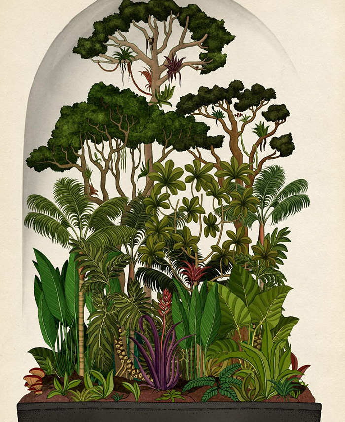 the-botanical-drawings-of-katie-scott-6