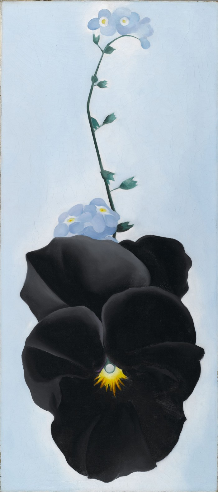 Georgia O'Keeffe. Black Pansy & Forget-Me-Nots (Pansy), 1926.